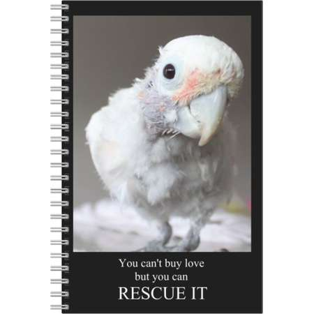 Cockatoo Notebook, Parrot Notebook, Cockatoo Stationary, Cockatoo book, Parrot Journal, Cute Cockatoo, Cockatoo Coco, Lucky Coco, Cute bird thumb